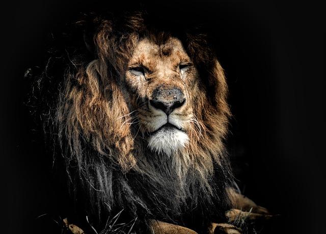 starý lev